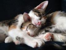 Gattini coccoli Fotografia Stock