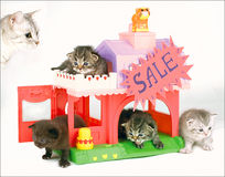 Gattini da vendere Fotografie Stock