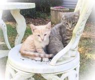 Gattini del paese fotografia stock libera da diritti