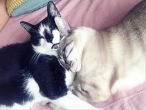Gattini delle coppie fotografia stock