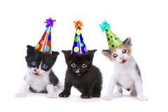 Gattini di canto di canzone di compleanno su priorità bassa bianca Fotografie Stock Libere da Diritti
