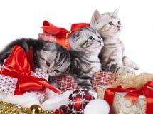 Gattini di Natale Fotografia Stock Libera da Diritti