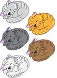 Gattini di sonno Illustrazione di Stock