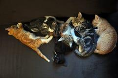 Gattini di sonno Immagine Stock Libera da Diritti