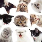 Gattini divertenti Fotografie Stock