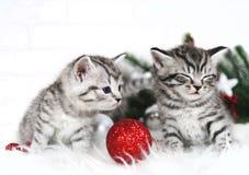 Gattini divertenti Gattino curioso Natale Fotografie Stock Libere da Diritti