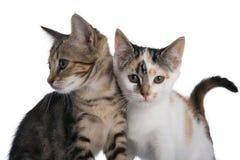 Gattini due Fotografia Stock Libera da Diritti