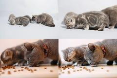 Gattini e gatto della mamma che mangia alimento per animali domestici dal pavimento, multicam, schermo di griglia 2x2 Immagini Stock Libere da Diritti