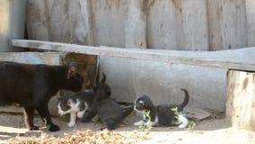 Gattini ed il suo gatto della madre in campagna video d archivio