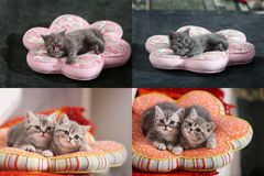 Gattini, gatti e cuscini, multicam, griglia 2x2 Immagini Stock