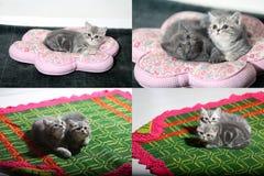 Gattini, gatti, tappeto e cuscini, multicam, griglia 2x2 Immagine Stock