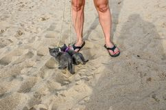 Gattini minuscoli che esplorano una spiaggia fotografia stock libera da diritti