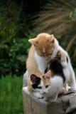 Gattini nel giardino Fotografia Stock Libera da Diritti