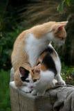 Gattini nel giardino Fotografie Stock Libere da Diritti