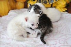 Gattini neonati Immagini Stock