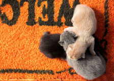 Gattini neonati. Fotografie Stock Libere da Diritti