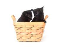 Gattini neri in un cestino immagini stock