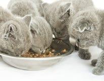 Gattini sopra bianco Fotografia Stock