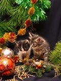 Gattini sotto un albero di nuovo anno Fotografia Stock Libera da Diritti