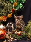Gattini sotto un albero di nuovo anno Immagine Stock