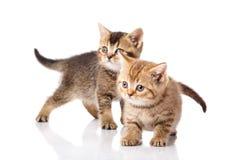 Gattini su una priorità bassa bianca Immagini Stock