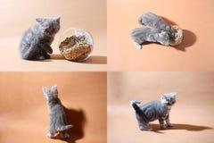 Gattini sul pavimento, multicam, schermo di griglia 2x2 Fotografie Stock