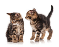 Gattini svegli Immagine Stock