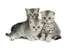 Gattini svegli Fotografie Stock