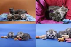 Gattini svegli con i macarons, multicam, schermi di griglia 2x2 Fotografia Stock