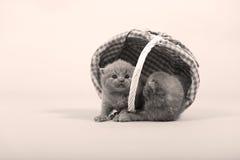 Gattini svegli in un canestro Immagine Stock