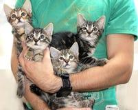 Gattini - tenuti in armi dal giovane fotografia stock
