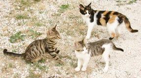 gattini tre Fotografie Stock Libere da Diritti