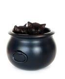 Gattini in un calderone Immagine Stock