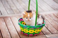 Gattini in un canestro variopinto Immagini Stock Libere da Diritti