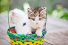Gattini in un canestro variopinto Fotografie Stock Libere da Diritti
