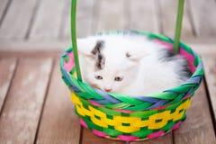Gattini in un canestro variopinto Fotografia Stock