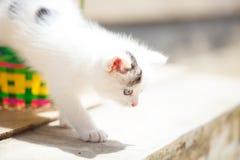 Gattini in un canestro variopinto Fotografia Stock Libera da Diritti
