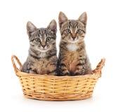 Gattini in un cestino Immagini Stock