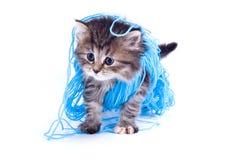 Gattino immagine stock