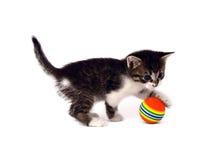 Gattino Fotografia Stock Libera da Diritti