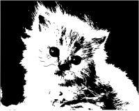 Gattino Immagini Stock