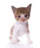 Gattino fotografie stock libere da diritti