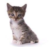 Gattino fotografia stock