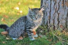 Gattino accanto all'albero Fotografia Stock