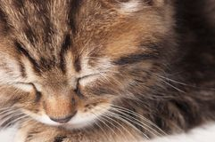 Gattino addormentato Immagini Stock Libere da Diritti
