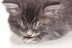 Gattino addormentato Fotografie Stock