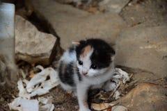Gattino adorabile Immagini Stock Libere da Diritti