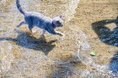 Gattino adorabile che cammina lungo il lago Fotografie Stock Libere da Diritti