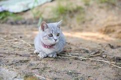 Gattino adorabile che si siede sulla riva del lago Immagine Stock