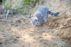 Gattino adorabile che sta al gioco la riva del lago Fotografia Stock Libera da Diritti